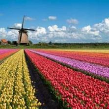 네덜란드 유학을 선택하는 이유?